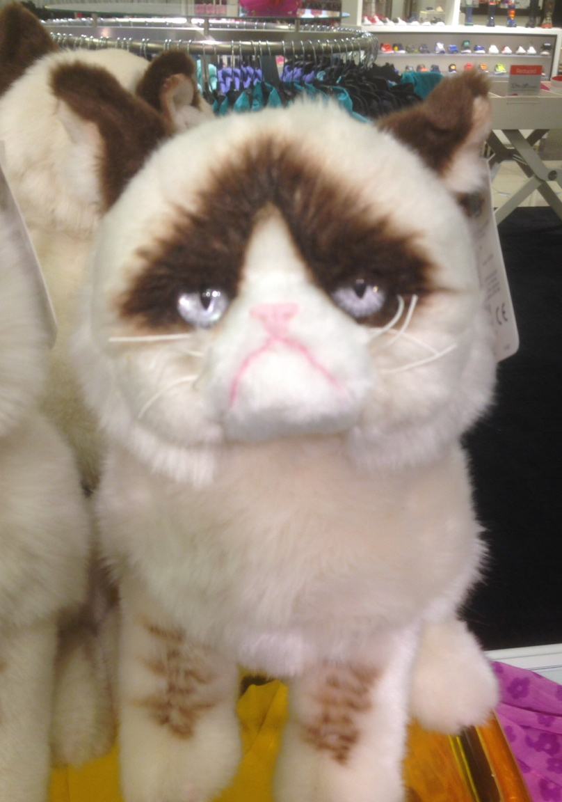 Grumpy cat at nordstrom