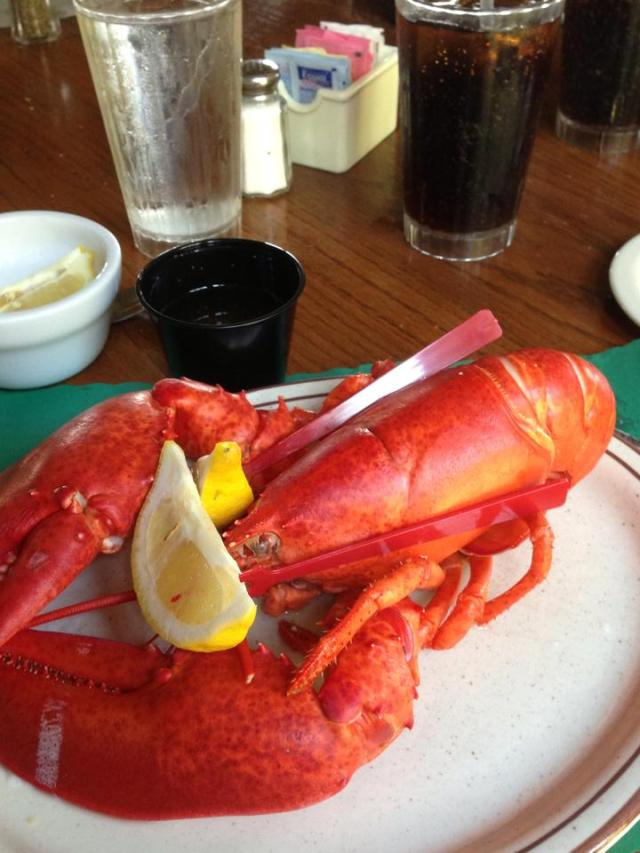 cape neddick lobster 2