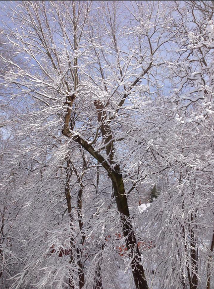 Snow February 5, 2016