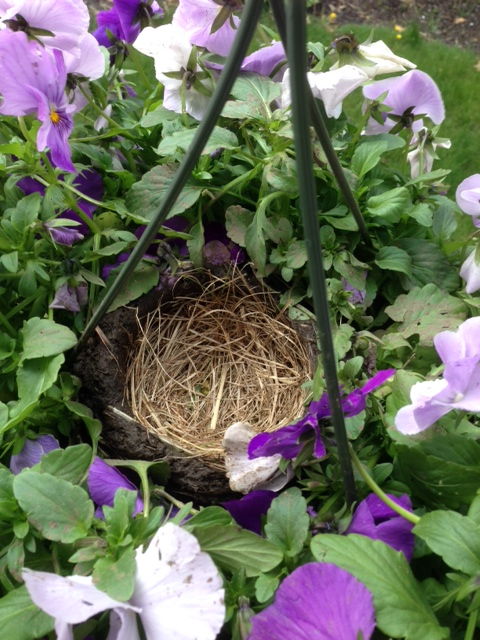 nest with grass 2016