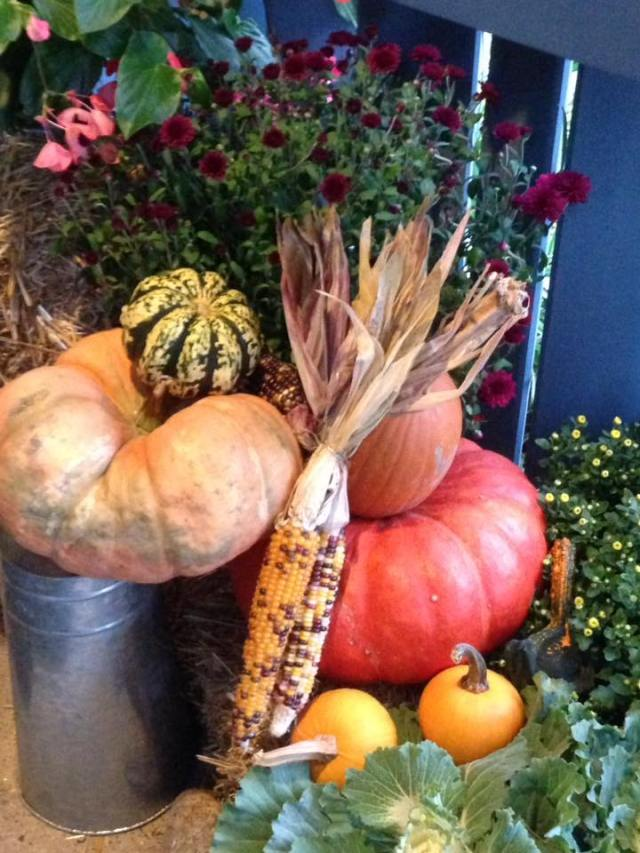 cnlp fall display 2