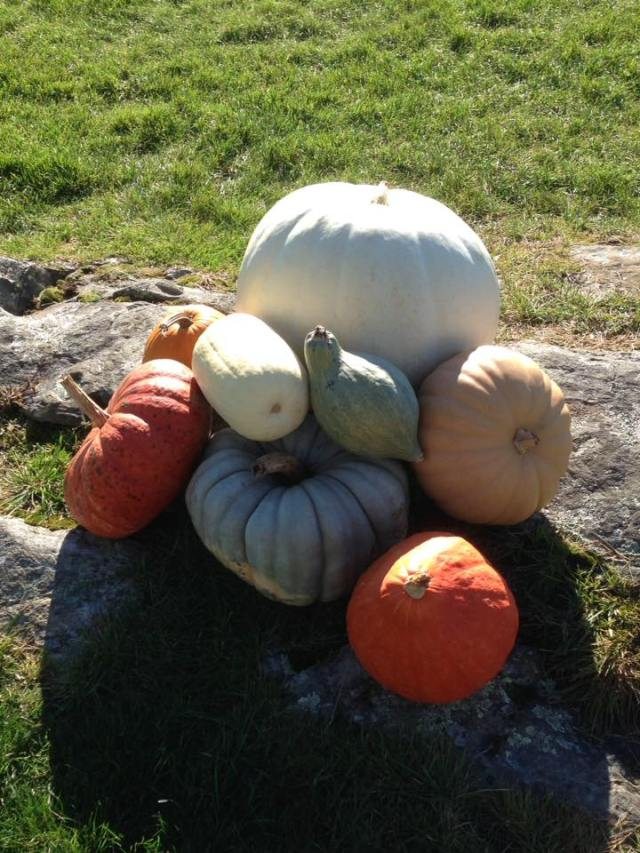 more sni gourds