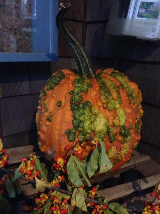 cnlp pumpkin